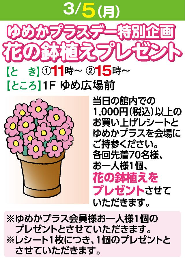3/5花の鉢植えプレゼント
