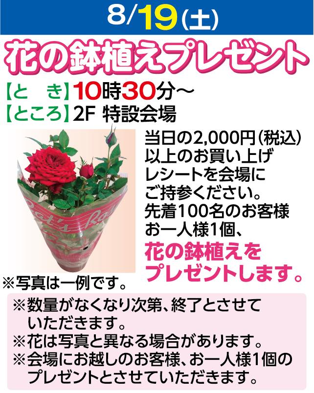 8/19花の鉢植えプレゼント