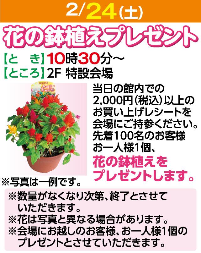 2/24花の鉢植えプレゼント