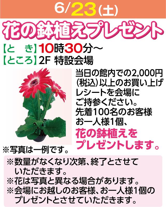 花の鉢植えプレゼント
